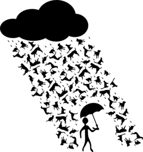 raining-cats-and-dogs-md