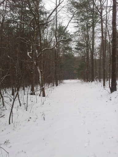 Getting a taste for snowy winter trail running, so cold but fun!