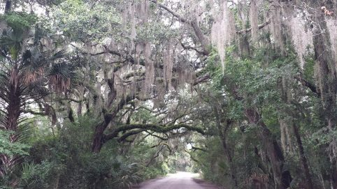 The natural canopy shading the run course through Fort Clinch State Park.